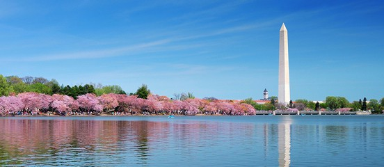 Philadelphia Cherry Blossom Festival 2020.National Cherry Blossom Festival March 20th To April 12th 2020