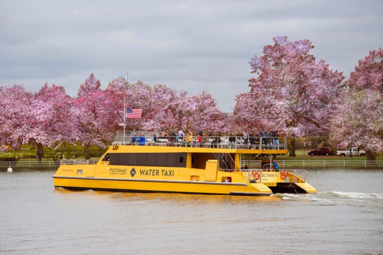 Taxi Vessel - Cherry Blossoms